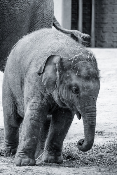 fn_20130611_zoo_1_089