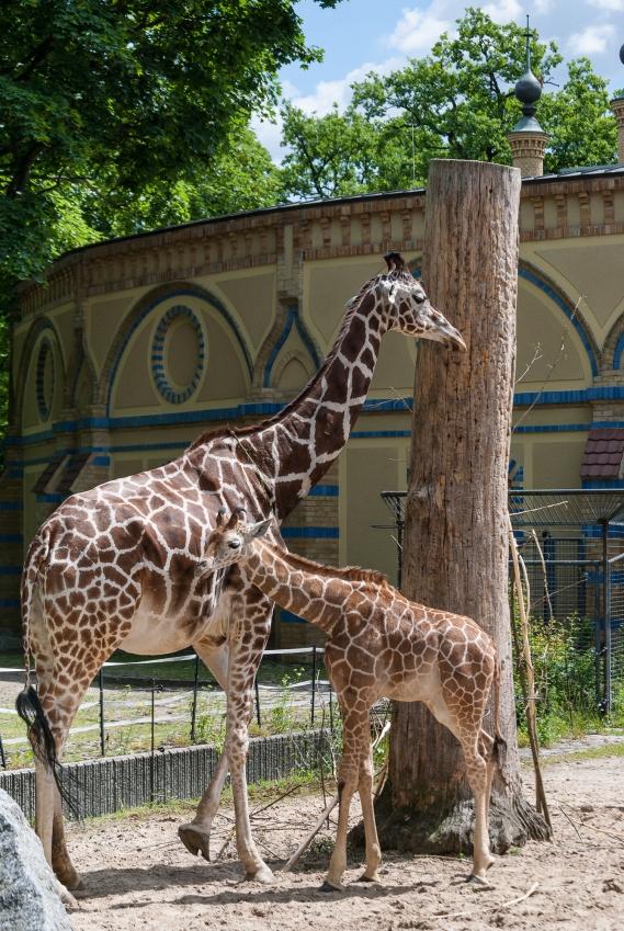 fn_20130611_zoo_1_147