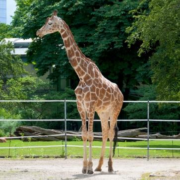 fn_20130611_zoo_1_155