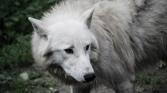 fn_20130611_zoo_1_334_web