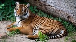 fn_20130611_zoo_2_161_web