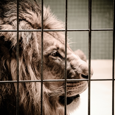 fn_20130611_zoo_2_210_web