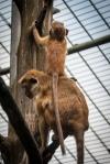 fn_20130611_zoo_2_385_web