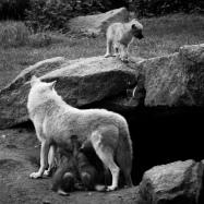 fn_20130611_zoo_2_602_web