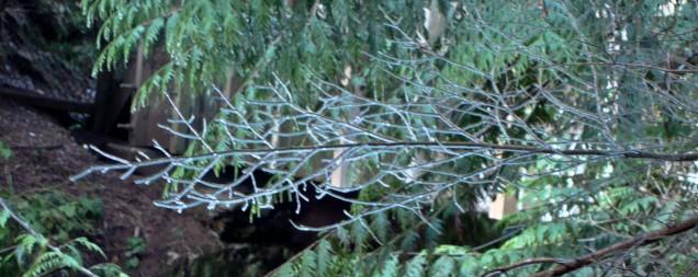 01-09-js_20110103_vancouver_277