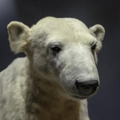 Mein Name ist Knut der Eisbär