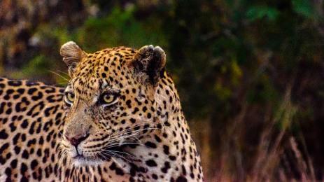 20150622-south-africa-01227-bob