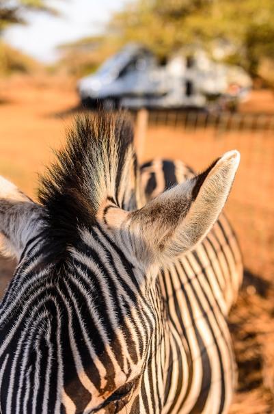 20150625-south-africa-06846-bob