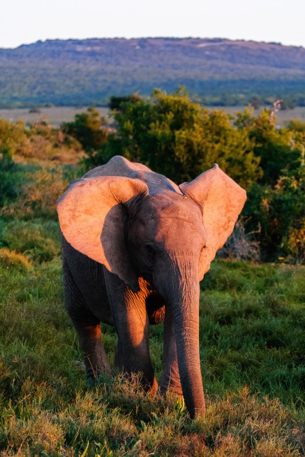 20150702-south-africa-13683-bob