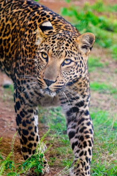 20150703-south-africa-14819-bob
