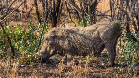 20150624-south-africa-05189-bob