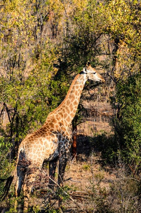 20150624-south-africa-05308-bob