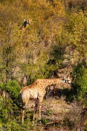 20150624-south-africa-05328-bob