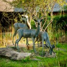 20150622-south-africa-00770-bob