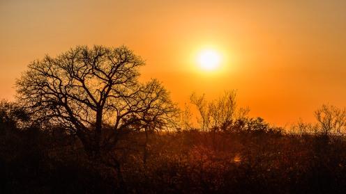 20150622-south-africa-00828-bob