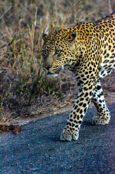 20150622-south-africa-01146-Edit-bob
