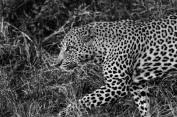 20150622-south-africa-01164-Edit-bob