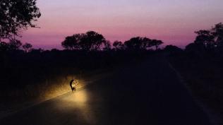 20150623-south-africa-01558-bob