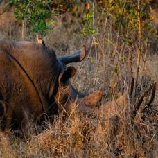 20150623-south-africa-01997-bob