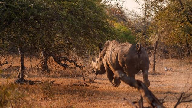 20150623-south-africa-02224-bob