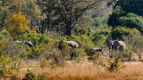 20150624-south-africa-04048-bob