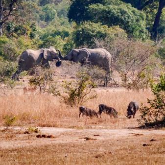 20150624-south-africa-04170-bob
