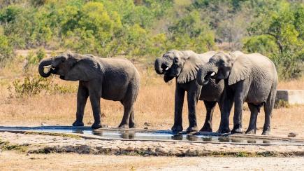 20150624-south-africa-04347-bob