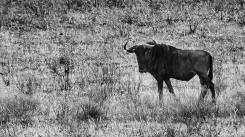 20150627-south-africa-02505-bob