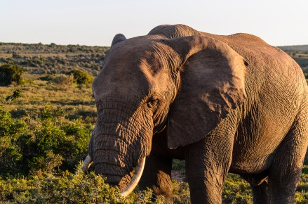 20150702-south-africa-13314-bob
