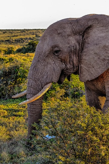 20150702-south-africa-13337-2_HDR-bob
