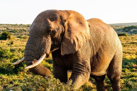 20150702-south-africa-13377-bob