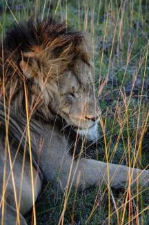 20150702-south-africa-13625-bob