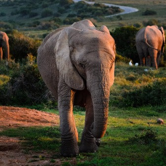 20150702-south-africa-13655-bob