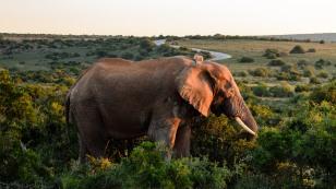 20150702-south-africa-13663-bob