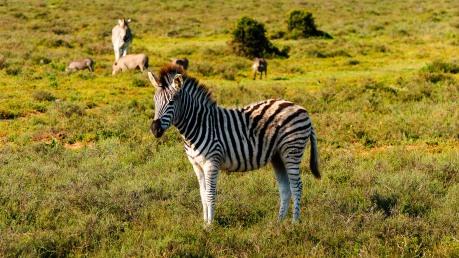 20150703-south-africa-14038-bob