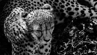 20150703-south-africa-14192-bob