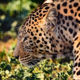 20150703-south-africa-14750-bob