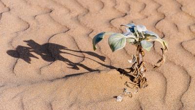 20150705-south-africa-16719-bob