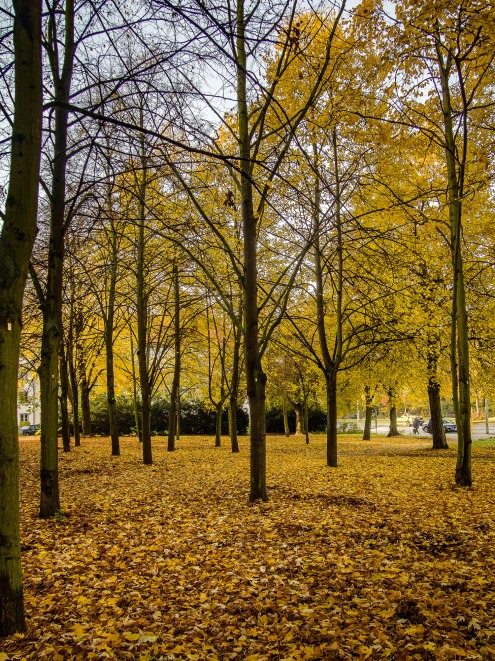 20151026_herbst_00093-HDR-2-bob