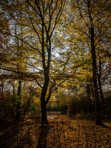 20151027_herbst_00457-HDR-bob