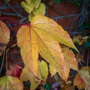 20151027_herbst_00702-HDR-bob